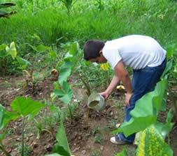 Abonos org nicos guaviare colombia - Abono organico para plantas ...