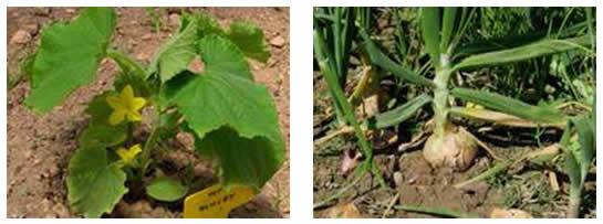 Elementos del suelo esenciales para las plantas for Que elementos conforman el suelo