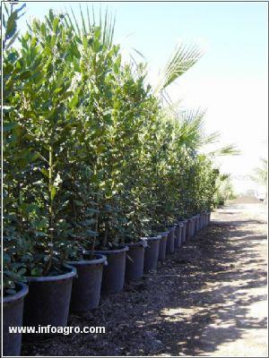 Se vende vivero de plantas para jardineria y repoblacion for Plantas precios viveros