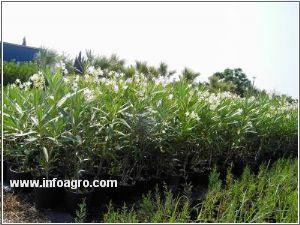Se vende vivero de plantas para jardineria y repoblacion for Viveros alcanar
