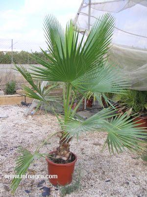 Se vende plantas ornamentales para el jardin for Vendo plantas ornamentales
