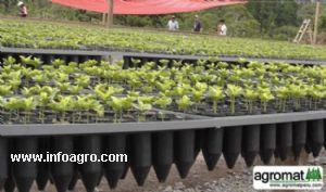 Se vende tubetes bandejas portatubetes y bandejas for Viveros de plantas en lima
