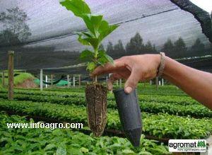 Se vende tubetes bandejas portatubetes y bandejas for Viveros forestales en colombia