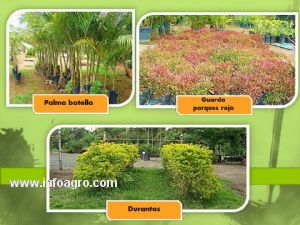 Se vende vivero en pereira colombia for Viveros forestales en colombia
