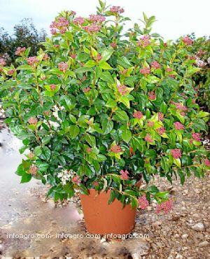 Plantas ornamentales vendedores de plantas ornamentales for 20 plantas ornamentales