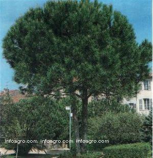 Captus y craseas de viveros alberola directorio empresas for Viveros arboles ornamentales