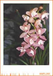Agricultura. El cultivo de la orquídea.