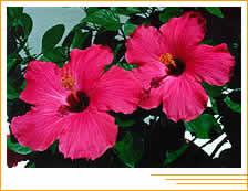Arbustos En Jardineria 1a Parte - Arbustos-de-flor