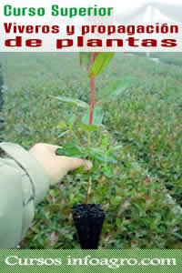 Curso on line de viveros y propagaci n de plantas curso for Distribuidores de plantas para viveros