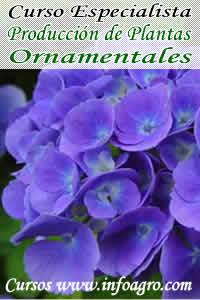 Curso on line en producci n de plantas ornamentales for Produccion de plantas ornamentales