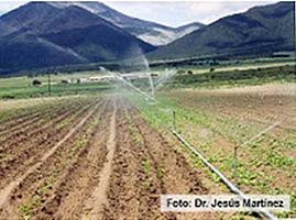 Riego en hortalizas - Tuberias de riego por goteo ...