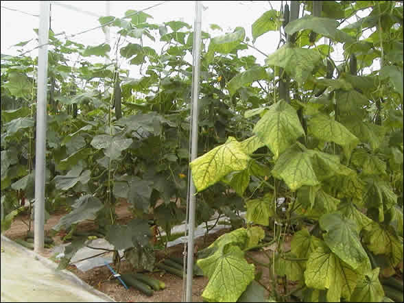 importancia virus agricultura: