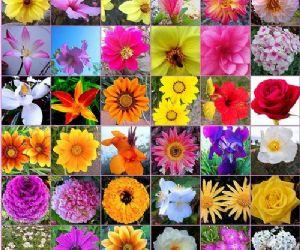 Buenas pr cticas agr colas en el sector de flores y plantas for Plantas ornamentales con flores