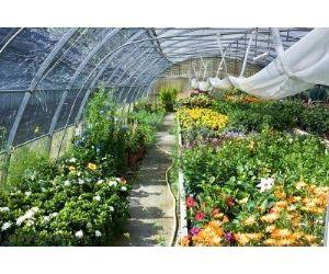 Cumplimiento de la normativa fitosanitaria en la for Que es un vivero de plantas