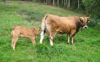 Sistemas de produccion de ganado bovino