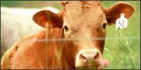 Compraventa de ganado ovino y caprino
